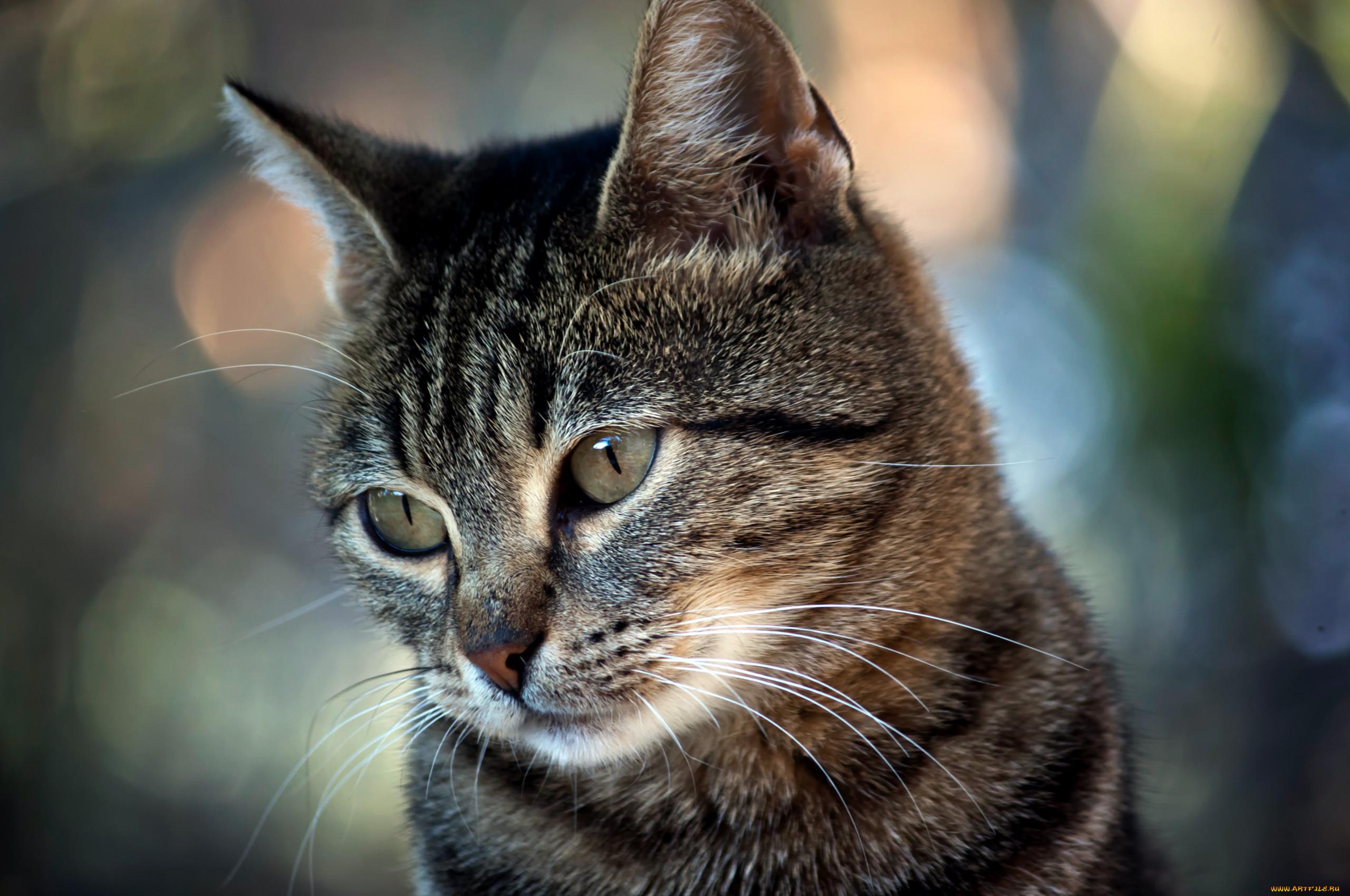 поклонников отличные картинки котов как актер